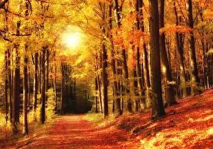 Картинка Осень Леса Парки Деревьев Природа