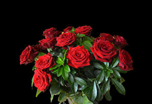 Обои Букет Роза На черном фоне Красная цветок