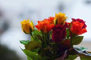 Картинки Букеты Розы Размытый фон Разноцветные цветок