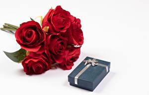 Обои Букеты Роза Белом фоне Красная Подарки Коробка цветок