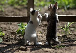 Картинка Коты Котенок 2 Вид сзади Ограда животное
