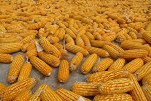 Фотографии Кукуруза Много Еда