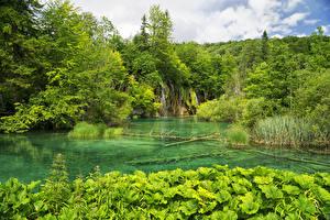 Картинки Хорватия Парки Водопады Озеро Лес Plitvice Lakes National Park Природа
