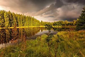 Обои Чехия Осенние Лес Пруд Траве Ústecký kraj