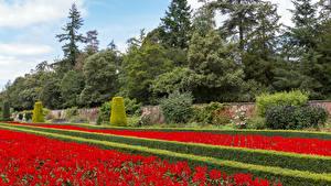 Обои Англия Сады Дизайн Кусты Деревья Cliveden Garden Природа картинки