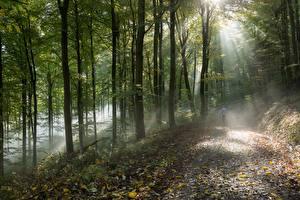 Картинка Лес Дерево Лучи света Тумане
