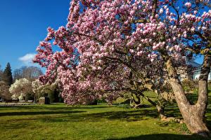 Фотография Германия Сады Цветущие деревья Трава Wilhelma - Zoological Botanical Gardens Stuttgart Природа