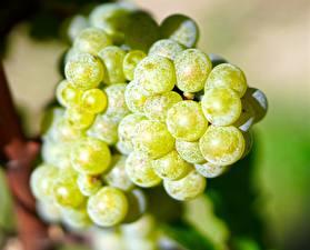 Фото Виноград Вблизи Зеленая Продукты питания