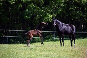 Фотография Лошадь Детеныши Траве 2