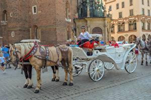 Обои Лошадь Сидя Карета Улице Животные