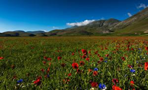 Картинка Италия Парки Поля Маки Васильки Холм Sibillini national park Природа