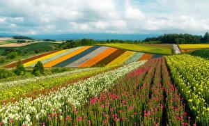 Обои Япония Поля Холм Разноцветные Khokkajdo Природа