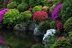 Картинка Япония Токио Парки Пруд Рододендрон Камни Кустов Природа