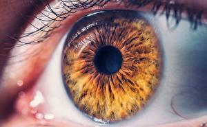 Картинки Макро Крупным планом Глаза Коричневые