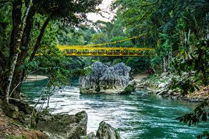 Обои Реки Мосты Дерева Cahabón River Guatemala Природа