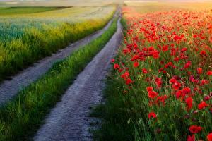 Картинка Дороги Маки Природа Цветы