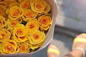 Обои Розы Букеты Желтый Цветы