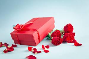 Фотография Роза День всех влюблённых Подарок Коробки цветок