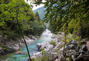 Фотографии Словения Река Лес Камень Ветки river Soca Природа