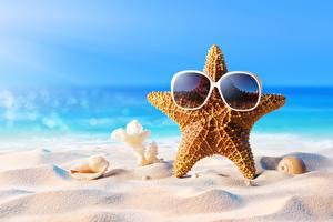 Обои Морские звезды Ракушки Лето Очков Песка