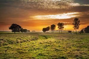 Фото Рассвет и закат Луга Дерево Траве