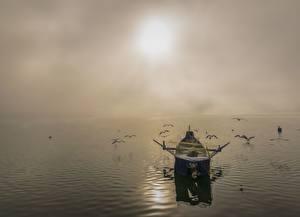 Фотография Рассветы и закаты Море Птицы Лодки Чайка Ловля рыбы Тумана Природа
