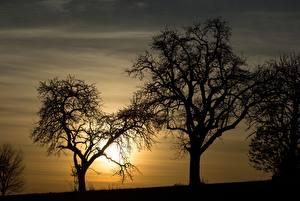 Картинки Рассветы и закаты Деревья Силуэт Природа