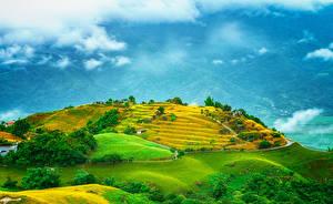 Фотографии Тайвань Поля Холмы Природа