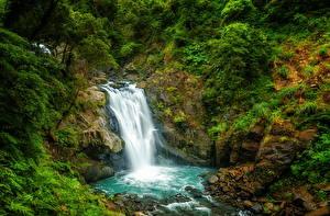 Фотографии Тайвань Водопады Утес Кустов Природа
