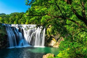 Картинки Тайвань Водопады Скале Ветвь Shihfen Waterfall Природа