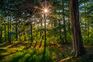 Картинки США Леса Флорида Ствол дерева Трава Лучи света Природа