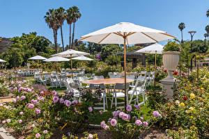 Фото Америка Сады Роза Калифорния Кусты Зонтом Стулья South Coast Botanic Garden Природа