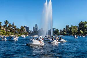 Фотография Штаты Парки Озеро Фонтаны Лебеди Калифорния Лос-Анджелес Пальмы Echo Park Lake Природа