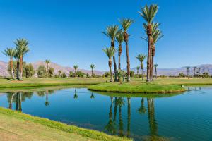 Картинка США Парк Пруд Калифорнии Пальмы Borrego Springs Resort Golf Course Природа