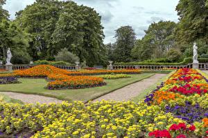 Обои Великобритания Сады Бархатцы Газон Деревьев Waddesdon Manor Природа