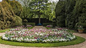 Обои Великобритания Сады Тюльпаны Дизайн Газон Кусты Деревья Ascott House Garden Природа картинки