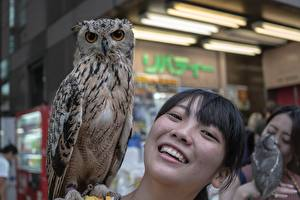 Фотографии Азиатки Совообразные Брюнетка Смотрит Улыбка Головы животное Девушки