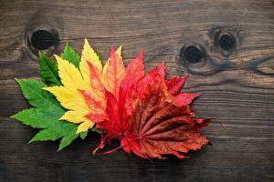 Картинка Осенние Листва Природа