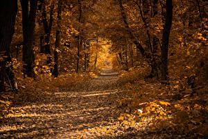 Картинка Осенние Леса Листья Деревьев Тропинка Природа