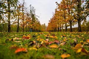 Фото Осень Траве Лист Размытый фон Природа