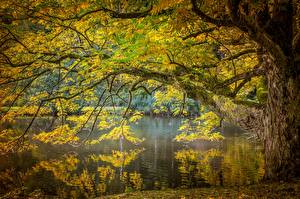 Фотографии Осенние Пруд Дерево Ветка Мха