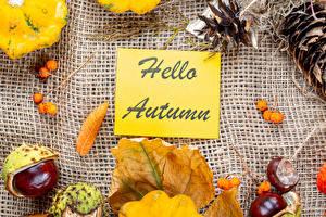 Фотографии Осенние Тыква Ягоды Английская Листва Шишка Природа