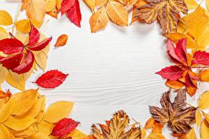 Картинка Осень Шаблон поздравительной открытки Листья Природа