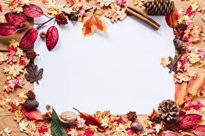 Фотография Осенние Шаблон поздравительной открытки Шишка Листва Природа