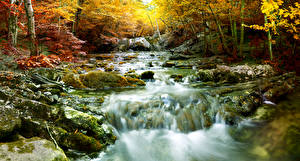 Картинка Осенние Водопады Мха Дерево Ручеек Природа