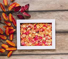 Обои Осень Доски Листья Природа
