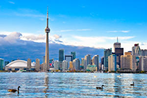 Картинка Канада Дома Озеро Торонто Башня Города