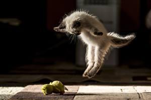 Фото Коты Котенок Прыгает Забавные животное
