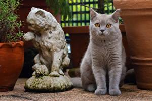 Обои Коты Скульптуры Британская короткошёрстная Взгляд Животные