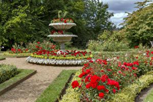 Обои Англия Сады Розы Кусты Дизайна Hughenden Manor Garden Природа